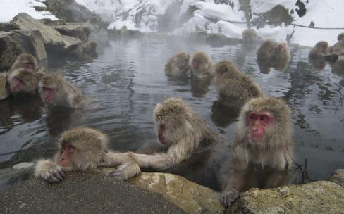 地獄谷野猿公苑