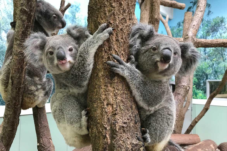 コアラに会える緑いっぱいの「鹿児島市平川動物公園」