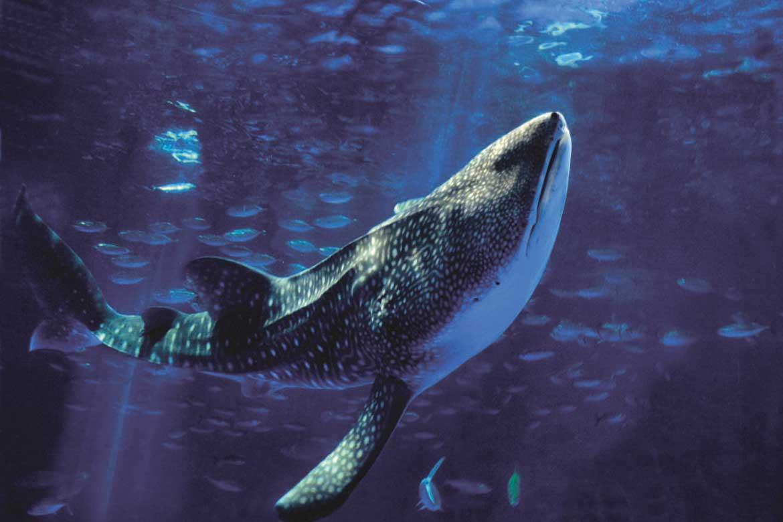 ジンベエザメやイルカの迫力満点「いおワールド かごしま水族館」