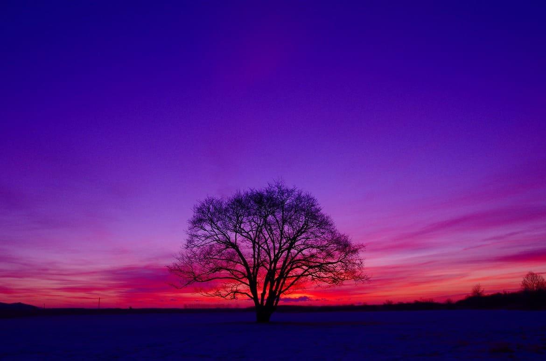 恋人のように寄り添う「ハルニレの木」