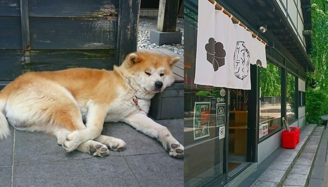 秋田犬の武家丸に会えるかも「角館さとくガーデン」