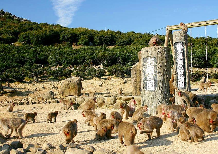 お猿まみれ「銚子渓・自然動物園 お猿の国」
