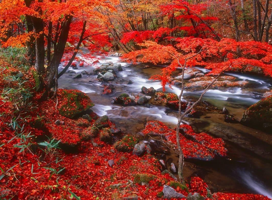 清流と紅葉のコントラストは見とれるほど「強滝」