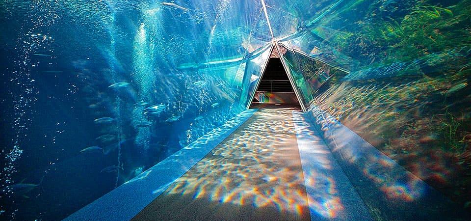 福島沖の潮目を表した大水槽は圧巻!「アクアマリンふくしま」