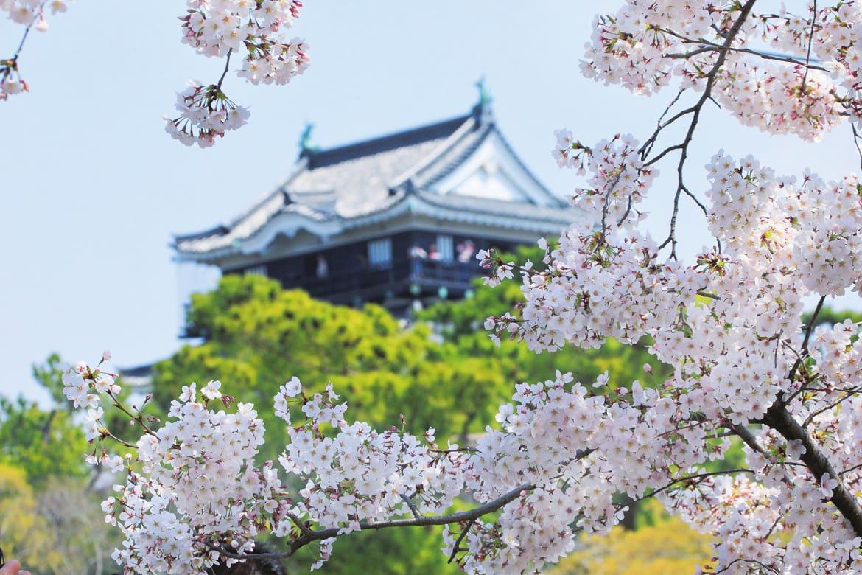 城と月夜と花景色。東海随一の「岡崎城の夜桜」