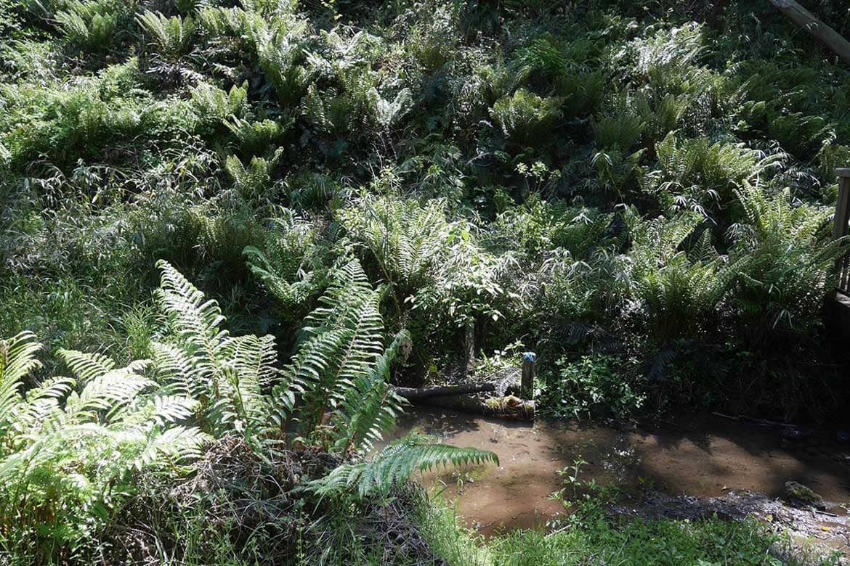 うっそうとシダが茂る谷からスタート