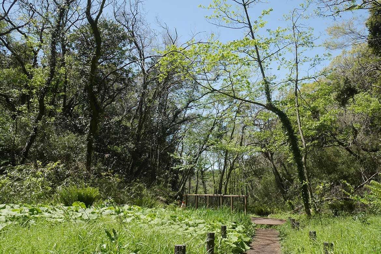小川に沿って「まんなか湿地」へ。6月にはホタルが見られます!