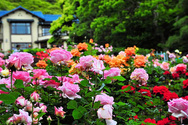 鎌倉ならでは!文化の薫りと気品あふれる花々「鎌倉文学館(鎌倉市)」