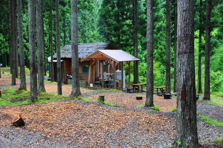 京都市内でオオサンショウウオに会える?キャンプ場「芦見谷芸術の森」(京都市)