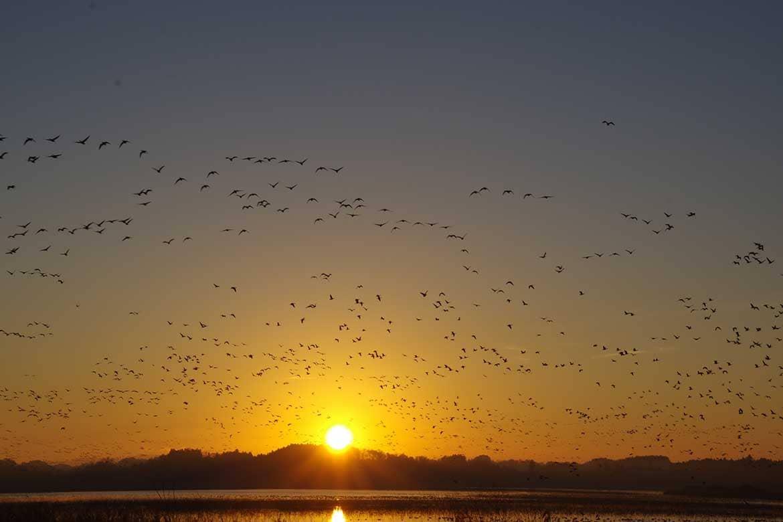 「渡り鳥の聖地」の絶景。数万羽が一斉に飛び立つ瞬間は鳥肌もの