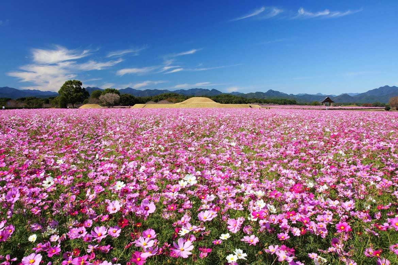 季節の花に彩られた歴史の風を感じる「特別史跡公園 西都原古墳群」