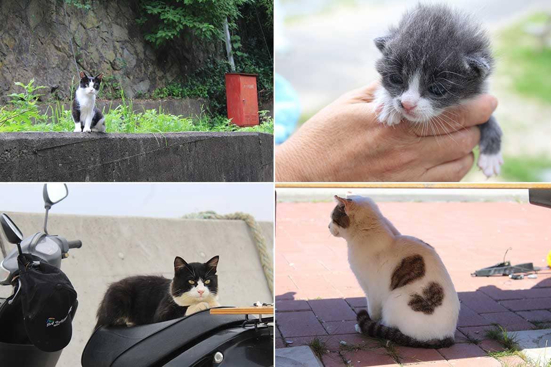 道を歩けば、そこここに個性豊かな猫たちが。出合いを楽しむ田代の旅