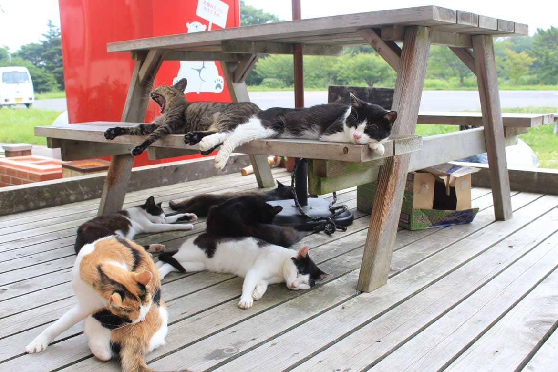 猫も一緒にまったり休憩。「島のえき」で田代島の海の幸も