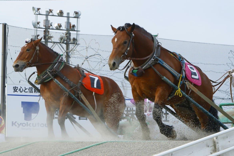 世界で唯一の競馬スタイル「ばんえい競馬」