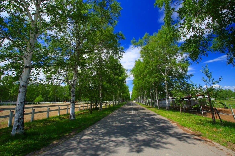 数々の作品のロケ地にもなった絶景「十勝牧場 白樺並木」