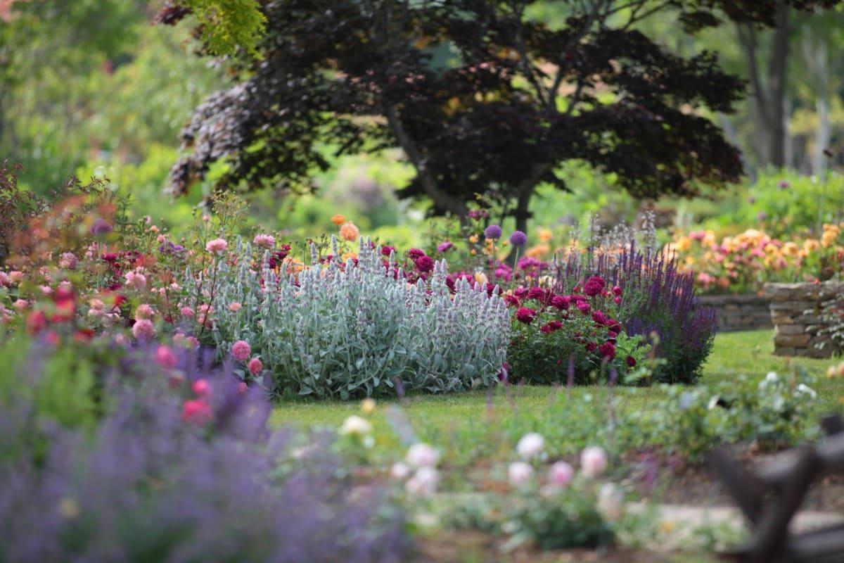 花と食と農をまるごと楽しめる「十勝ヒルズ」