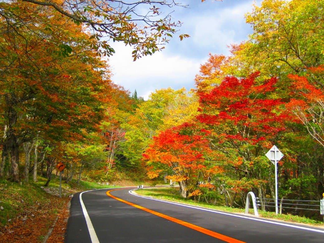 ドライブで楽しむ紅葉狩り「せせらぎ街道」