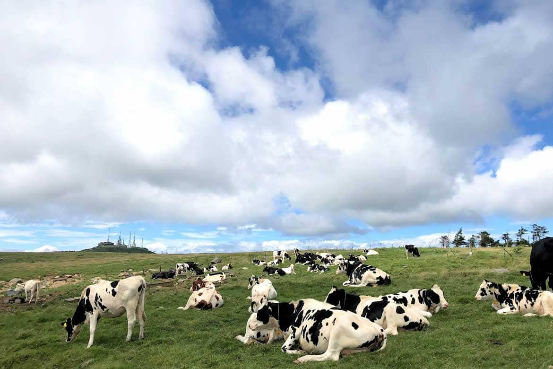 牧歌的風景が広がるビーナスラインの終点「美ヶ原高原」