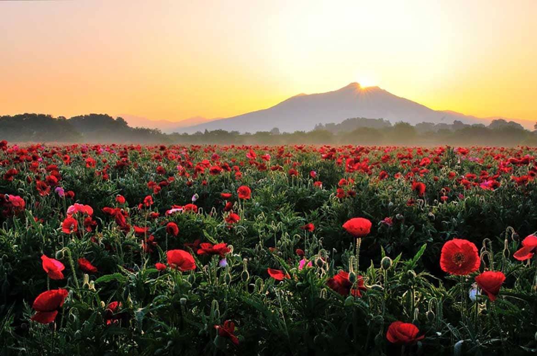 お花の絨毯と筑波山の絶景「小貝川ふれあい公園」