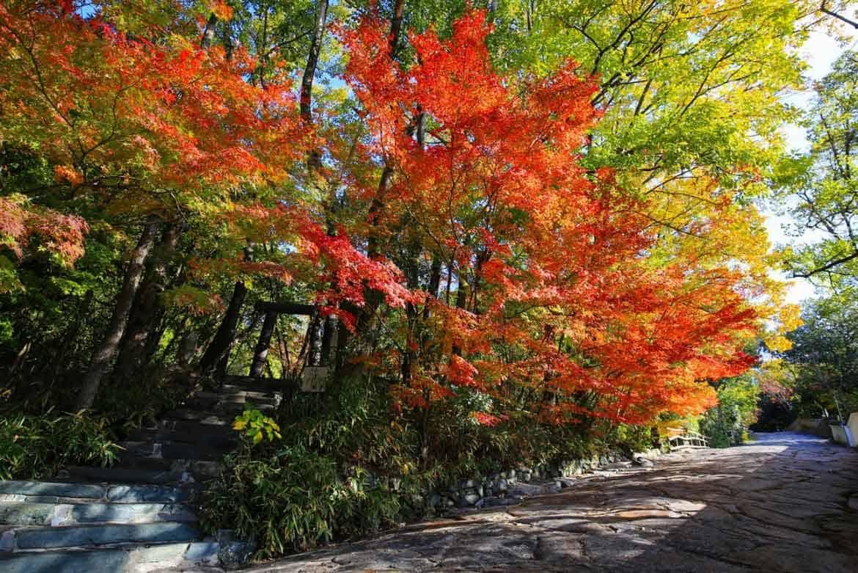二十四の季節とともにある四国を五感で楽しむ野外博物館「四国村」