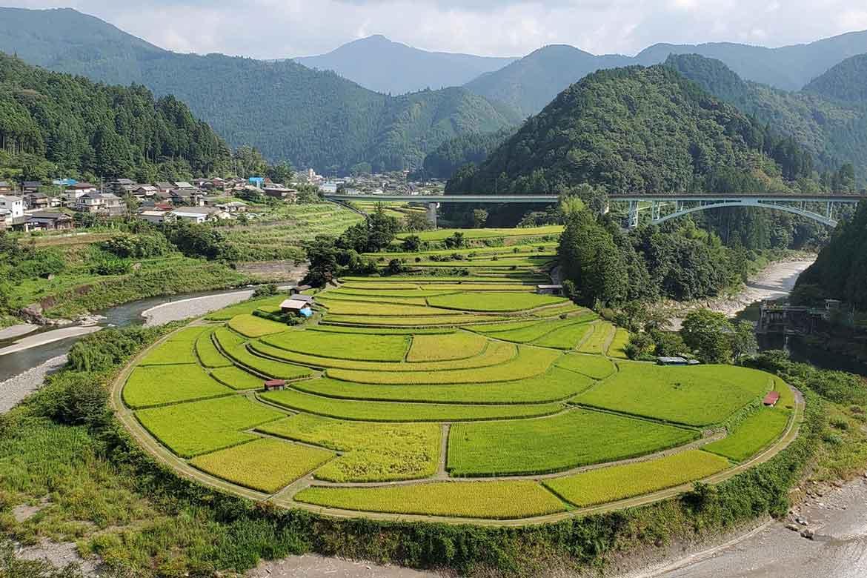 有田川町のシンボル「あらぎ島」で、四季折々の景色を楽しむ