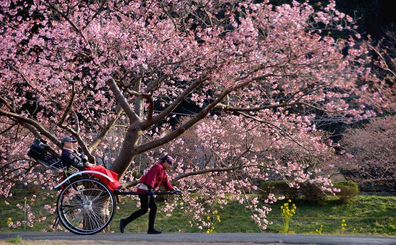 と まつり みなみ 菜の花 の 桜 2021年 みなみの桜と菜の花まつり