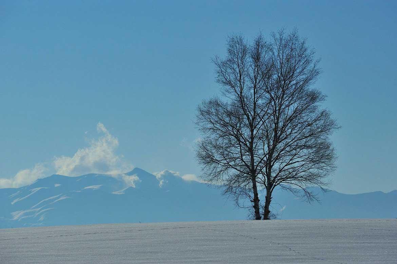 厳しい寒さの中で出会う自然の美しさ