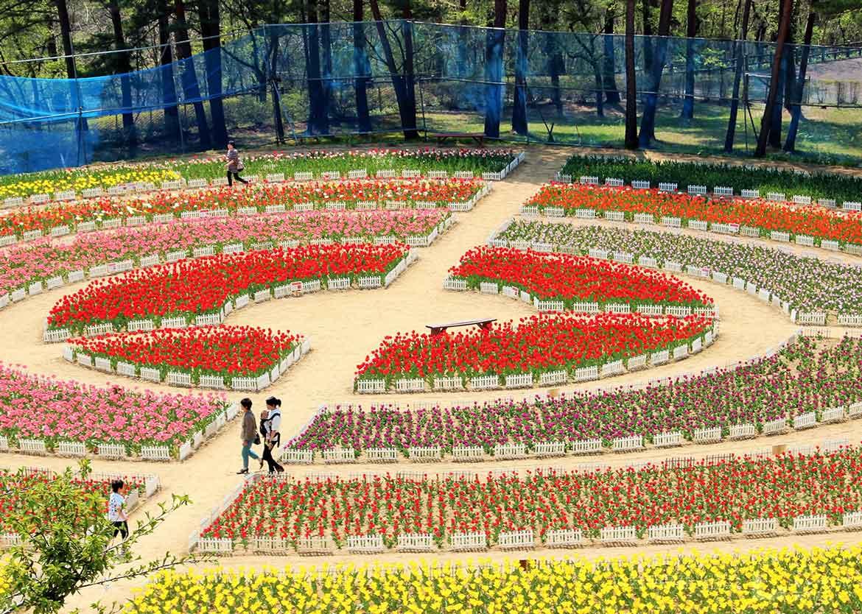 花を楽しむ水と緑の公園「雪谷川ダムフォリストパーク・軽米」