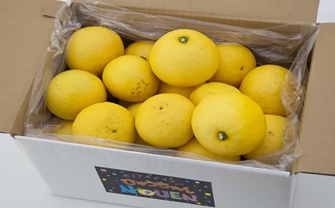 南国宮崎の恵みを感じる甘い果実