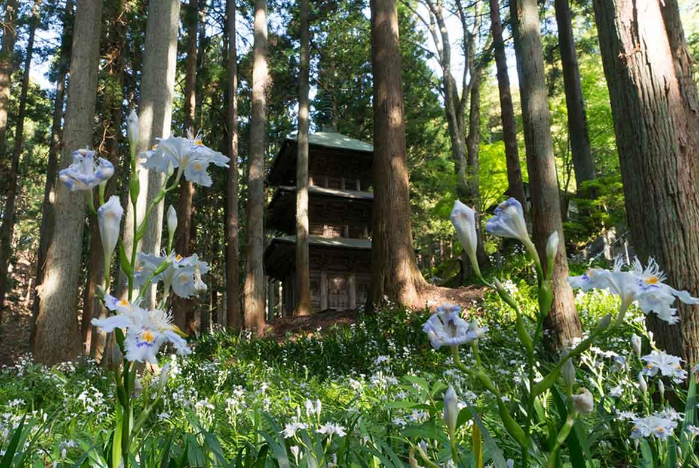 可憐なシャガの花が三重塔を彩る「高蔵寺」【いわき市】