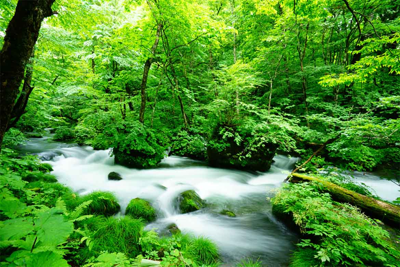 「阿修羅の流れ」から十和田湖畔「子ノ口」までの約7㎞は特に見応え満点