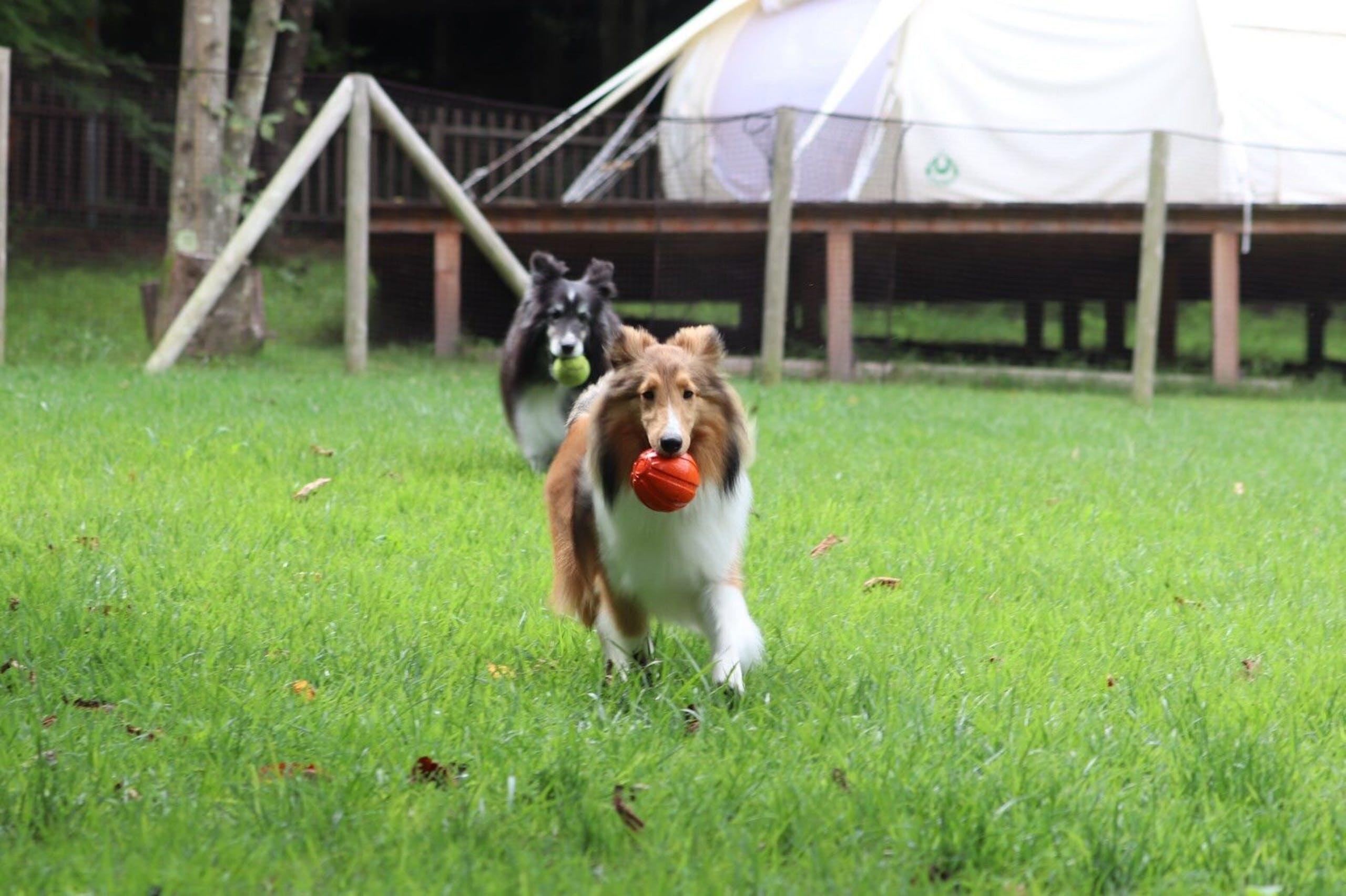 広いお庭で思い切り走り回ろう!